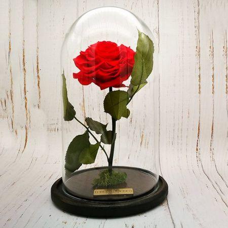 Trandafir Criogenat in cupola de sticla rosu