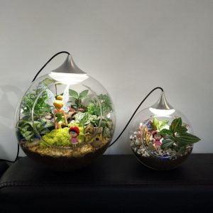 terariu cu plante suculente tip veioza led o15cmbol cadou personalizat eco terarii led cu plante naturale suculente kdecoro 2 2000x