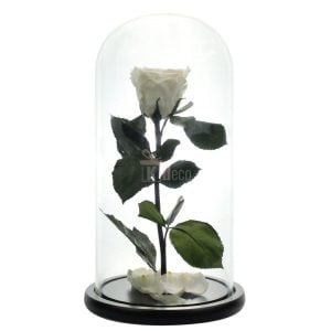 trandafir criogenat xl alb o65cm in cupola sticla 12x25cm cadou special cupole de sticla cu trandafiri criogenati kdecoro 2000x